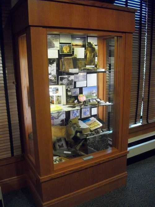 tni-display-case
